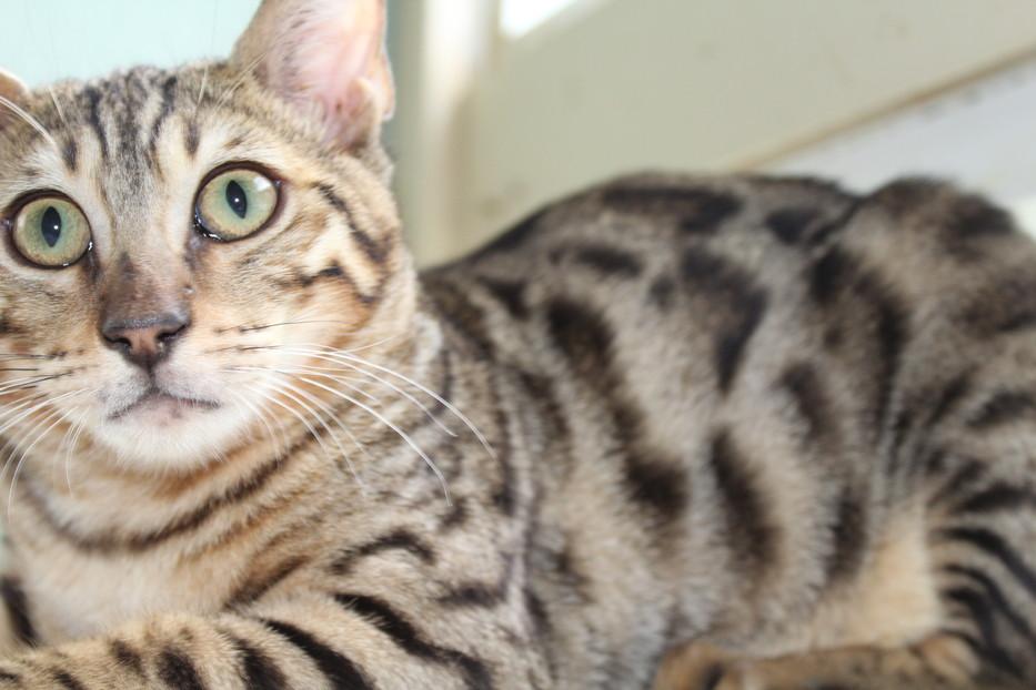 low cost cat spay las vegas